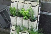 Tuinieren in poten