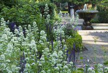 Rory's Garden / by Becky Moran