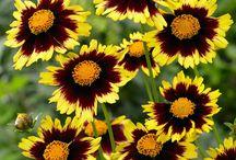 @-Flowers-@