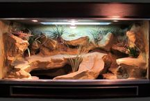 Leopard gecko vivarium