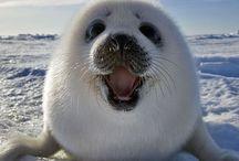 Animalitos sonrientes