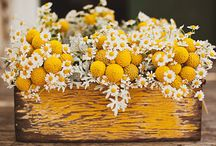 kvetinace