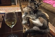 Classy Animals / These Animals Are Some Seriously Classy Critters...Break Out The Good China