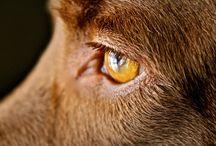 Animals- DogsII / by Deniport