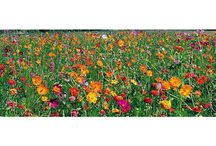 Jachères et Prairies Fleuries