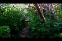 BigFoot Videos / by MulletRun Fishing