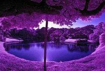Purple, Violet, Magenta