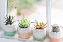 lakásba virágok