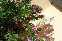 Fiori&piante!