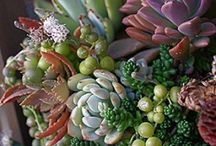 plants&gardens