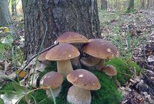 houby / všech hub