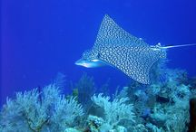 Belize Diving Tours - Blue Marlin Beach Resort / South Water Caye is a top-rated dive destination with spectacular wall dives and ocean drop-offs just 3 to 10 minutes from your room.