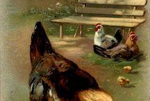 """"" chickens """""