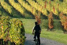 Wine / Tutto ció che riguarda il vino su Pinterest