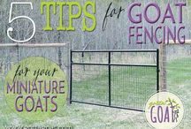 Goat Fencing / Goat fencing ideas and tips.
