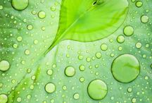dew drops / by Linda Zeiske