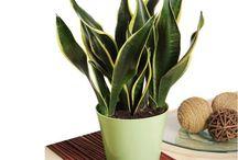 Shade loving plants I might not kill