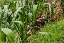 Copiii Africii / Children of Africa
