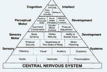Intégration neuro-sensorielle