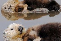 Otters / by Michelle Petri