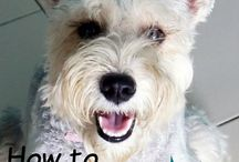 Dog Training Tips / Teach your dog how to be a well-mannered family member
