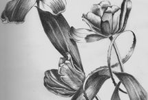 pencil drawings / Drawings I could stare at all day