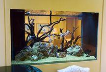 Aquariums / by Stephanie Walden