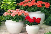 Idei pentru casă flori