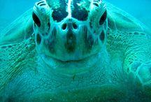 Sea Turtles / by Tracey Bertram