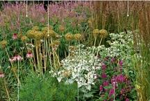 Rośliny ogród