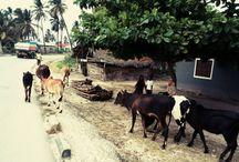 """Zanzibar 2015 / Zobaczcie fotki z naszego wyjazdu """" Zanzibar 2015 z nauką kitesurfingu """" Kolejny wyjazd już na sylwestra 29 grudnia."""