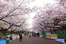 Hanami Festival 27-31/3/13