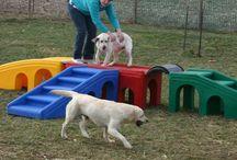Parco giochi per cane