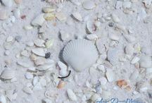 Sea Shells / by An'gel Ducote