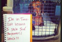 Animal shaming lol