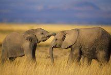 Elephants / by Joseph Aquilino