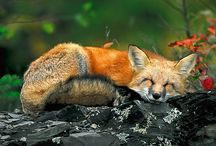 Portions for Foxes / by Catie