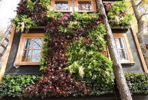 Treehouse / Casas en el arbol