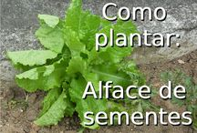 Horta e Jardim / #horta #hortaejardim #jardim #comoplantar #jardim #plantas #plantar #como