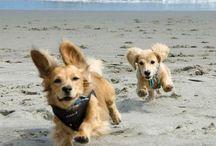 Pet Friendly Beaches / Because ... Florida!