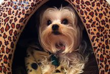 Dogs of Rover And Rover Toronto / Pictures of the wonderful dogs we have the pleasure of calling our clients.