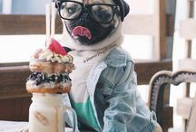 Appreciate the Pug / Pugs are the cutest thing on the planet