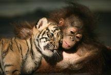 Getting Animal! / by Tiffany Bowers