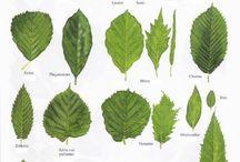 feuilles d'arbres
