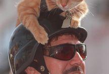 CATS.....!!