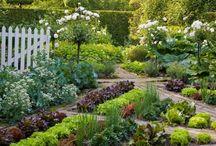 cut flower and veg garden