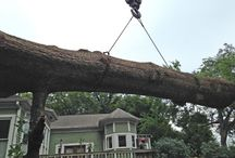 Tree Removal / Tree removal jobs done for our customers.