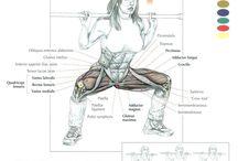 anatomi (træning)