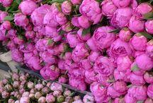 Vaaleanpunainen, rosa