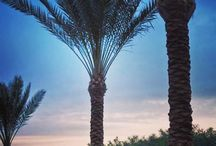 Palm Trees / Palm Trees / by Domina Coral Bay - Sharm el Sheikh